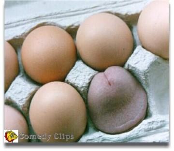 Telur Ajaib